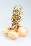 西印度豆薯 免版税图库摄影