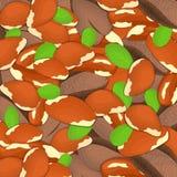 巴西坚果背景接近留间隔的可口brazilnuts导航在的例证胡说的样式核桃果子 免版税库存图片