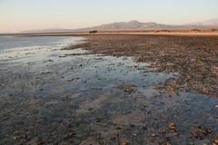 西奈沙漠和海靠岸与沙子和太阳和波浪 免版税库存图片