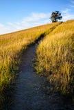 西奥多・罗斯福国家公园, 库存照片