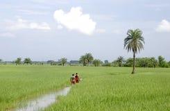 西孟加拉邦农业 免版税库存照片