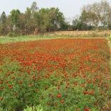 西孟加拉邦 库存照片
