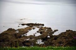 洛西恩海岸 库存照片