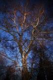 西方阳光的结构树 免版税库存照片