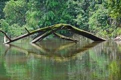 西方非洲的河 图库摄影