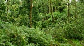 西方高地方式的森林 库存照片