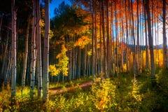 西方麋山的白杨木 免版税库存照片