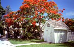 西方jacajandra关键的结构树 免版税库存照片