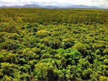 巴西森林的顶视图 免版税库存照片