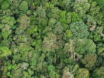 巴西森林 免版税库存照片