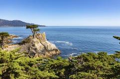 西海岸美国岩石海岸线  免版税库存图片