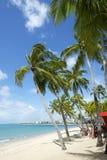 巴西海滩棕榈树马塞约Nordeste巴西 免版税库存图片