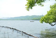 西湖的秀丽在杭州 免版税库存照片