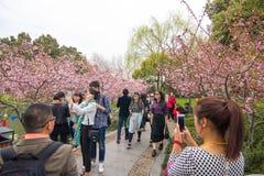西湖的,杭州04公园 免版税库存图片
