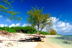 西湾海岸树树干 库存照片
