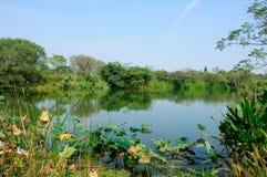 西溪沼泽地杭州中国 免版税库存图片