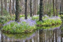 西溪沼泽地 库存照片