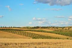 西班牙国家(地区)横向在春天 免版税库存照片