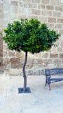 西班牙广场、正方形与树和教会 免版税库存图片