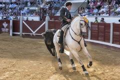 西班牙斗牛士Leonardo埃尔南德斯由在一个非常复杂的位置的公牛在马背上追逐了 库存照片