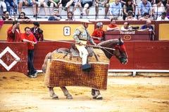 西班牙斗牛 有一支矛的骑马斗牛士在马 被触怒的公牛侵袭斗牛士 西班牙2017 07 25 2017年 Vinaros Monume 免版税库存照片