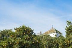 西班牙桔子和钟楼 图库摄影