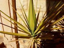西班牙植物 库存图片