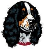 西班牙猎狗头 免版税库存图片