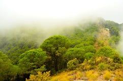 西班牙的森林本质 免版税图库摄影