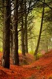 西班牙的森林本质 免版税库存图片