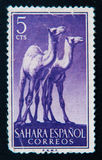 西班牙邮票显示两长颈鹿 大约1964年 库存图片