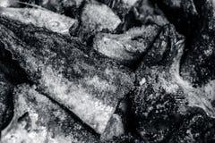 西班牙鲭类大王马鲛鱼、大鲭鱼用卤汁泡与盐和柠檬汁 免版税库存图片