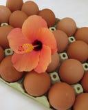 西班牙鸡蛋 免版税图库摄影