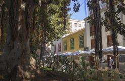 西班牙,加那利群岛,特内里费岛,圣克鲁斯de特内里费岛, Decembe 免版税库存照片