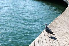 西班牙 卡塔龙尼亚 巴塞罗那 在船坞的海鸥 免版税库存照片