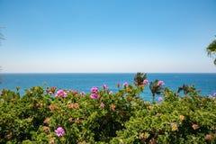 西班牙 海和好的花 免版税库存图片