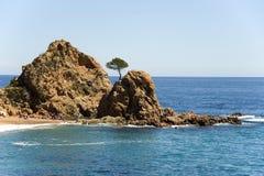 西班牙 de 3月tossa 在岩石的一棵杉木 免版税库存照片