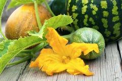 西瓜、瓜和夏南瓜与花 免版税库存照片