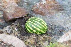 西瓜在河 库存照片