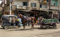 西瓜推销员在塞加拉附近古老站点等待街道的顾客在开罗附近在埃及 库存图片