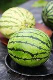 西瓜整个,照片土气样式 免版税图库摄影