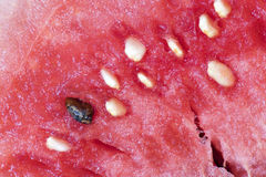 西瓜种子宏指令  免版税库存照片