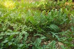 西瓜,在绿色瓜的西瓜的图象在t调遣 库存图片