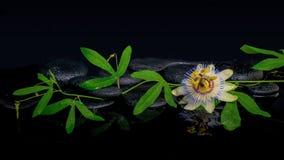 西番莲花和绿色分支的美好的温泉概念 库存照片