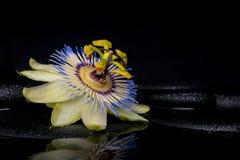 西番莲花的温泉概念在禅宗石头的与反射 免版税库存照片