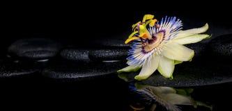 西番莲花美好的温泉设置在禅宗石头的 免版税库存照片
