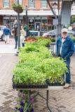 西红柿供营商在罗阿诺克市市场上 库存照片