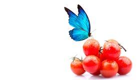 西红柿和蝴蝶 库存照片