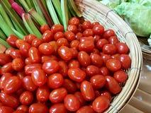 西红柿/蕃茄红色Ganet 免版税库存图片
