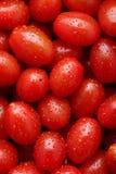 西红柿 免版税库存图片